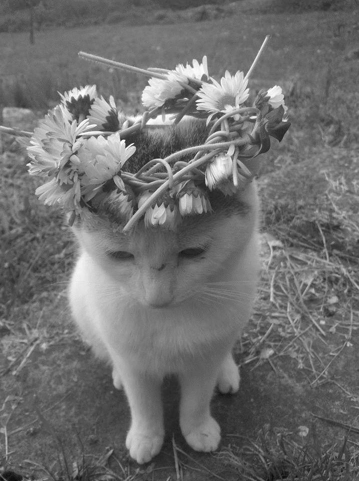Best Cat Photography Black White Images On Pinterest - This photographer is celebrating stray cats through majestic portrait photographs