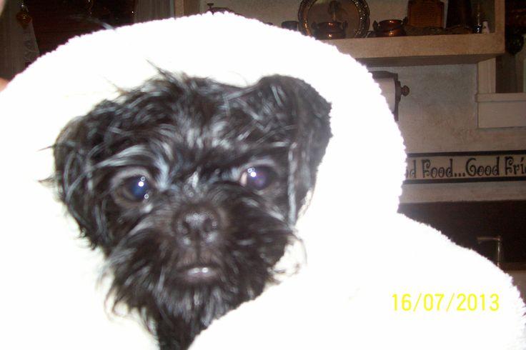 how to keep a dog warm after a bath