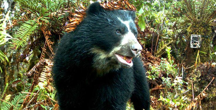 Animales sorprendentes que habitan en Colombia   Marca país Colombia