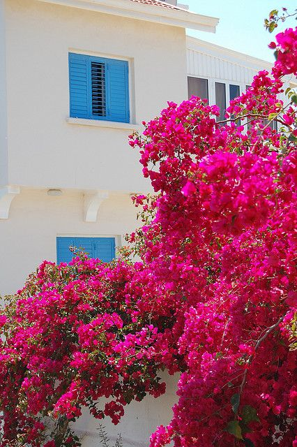 Protaras in Bloom ! Cyprus
