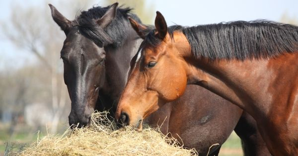 On Animal Webaction, clicks are free and help feed abandoned horses.