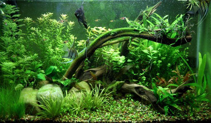 planted aquarium 20 gallon   Russell's Aquarium Journals: 29 Gallon Planted Tank