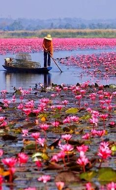 Red Lotus Sea, Located in Udonthan.