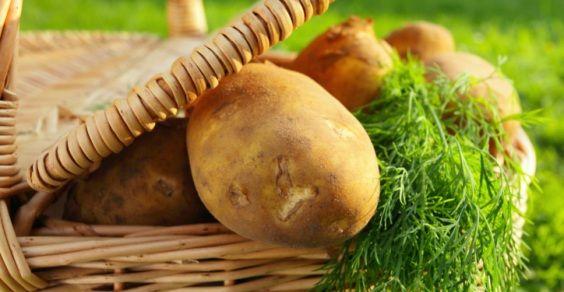 Come conservare correttamente patate, aglio e cipolle?  http://www.greenme.it/mangiare/altri-alimenti/7712-conservare-patate-cipolle-aglio-non-germogliare