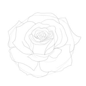 how to draw a rose and paint it
