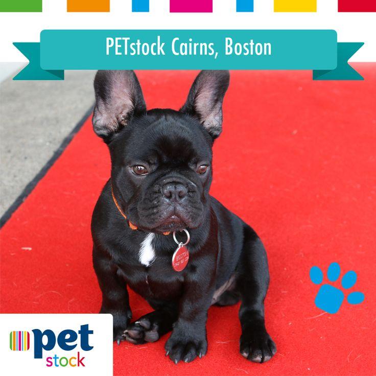 Boston the PETstock Cairns winner