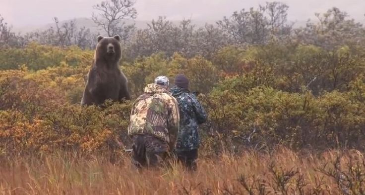 How Close Does This Beast of an Alaskan Brown Bear Get Before They Release the Arrow? [VIDEO]