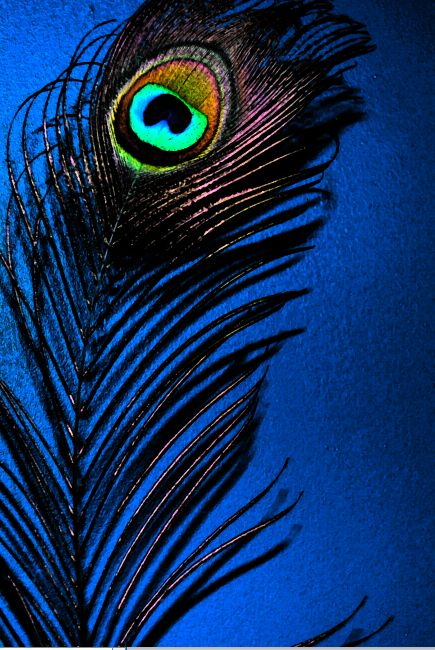 This would be pretty for decoupage..  Peacock feather.