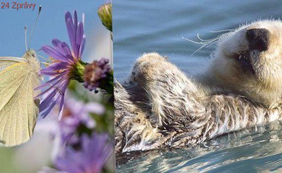 Louky bez motýlů a řeky bez vyder: Sucho z Česka vyhání živočichy i hmyz
