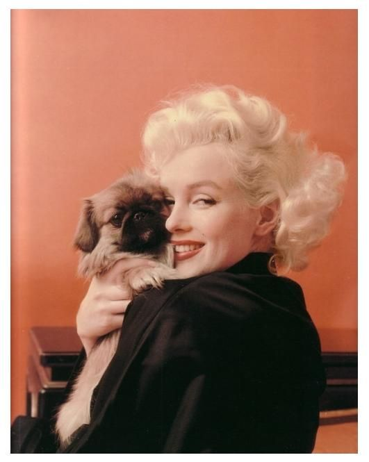 MM with a pekingese, photographed by Milton Greene, 1955.  The dog's name was Maf, short for mafia, a gift from Sinatra.