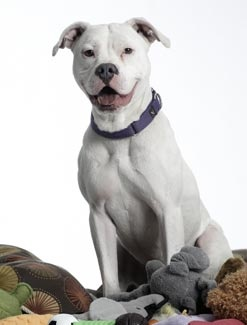 Adopt Sammy Hagar!Sammy Hagar, Style, Adoption Sammy