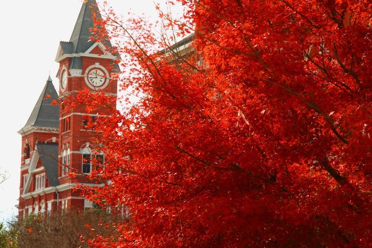 Home and Heart Forever!!1200800 Pixel, Auburn Universe, Auburn University, Auburn Fall