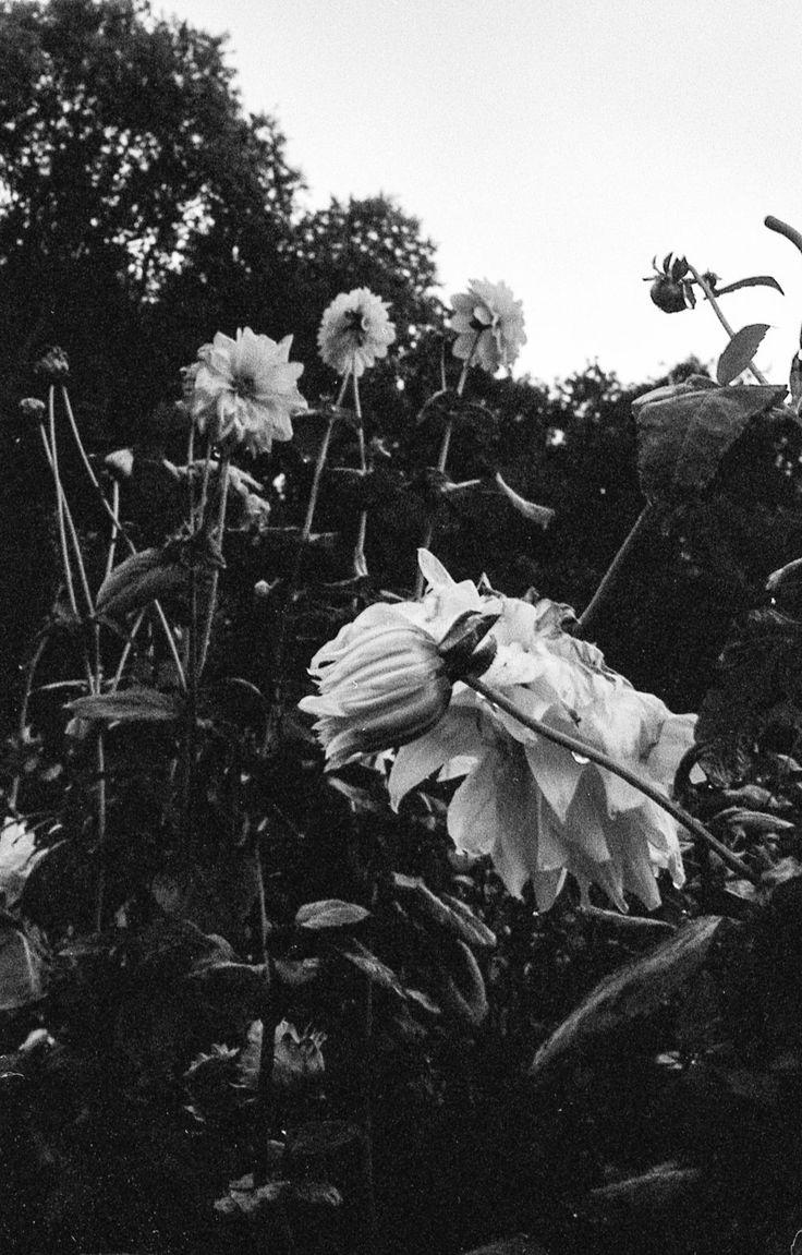 Bloemen in de moestuin van het Hof