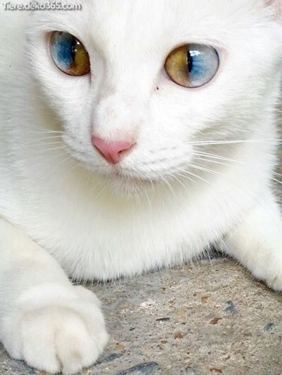 Creative and amazing amazing white animals