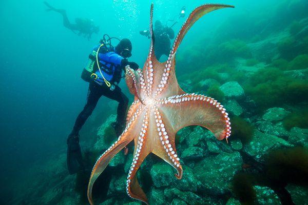 Octopus Kingdom by Alexander Semenov