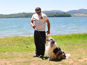 köpek eğitimi elit yavru http://www.elityavru.com/kopek-egitimi