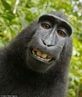 Wild Animals Wild About Selfies