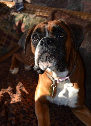 Fern the boxer...