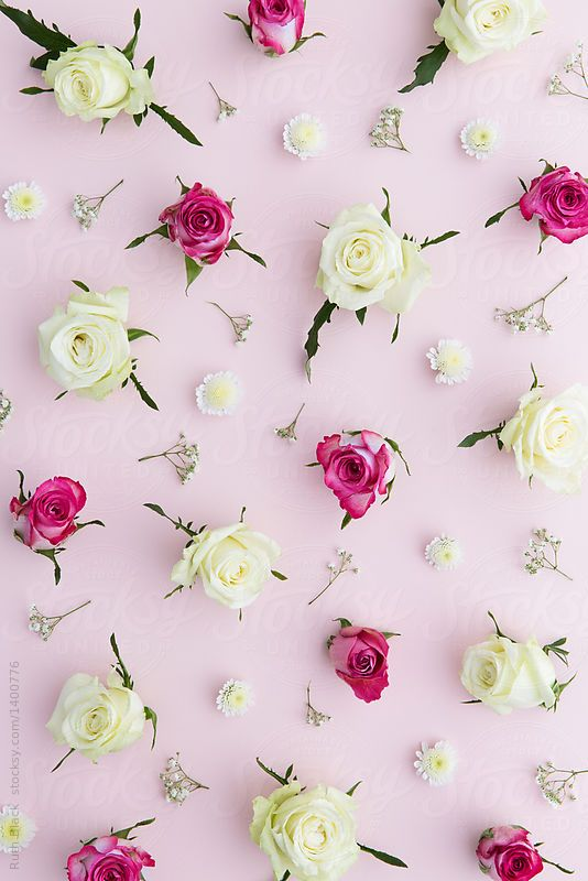 Rose background by Ruth Black