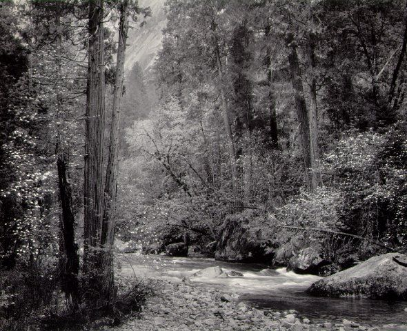 Ansel Adams Photography | Ansel Adams, Tenaya Creek, Dogwood, Rain , Yosemite Valley, 1948: