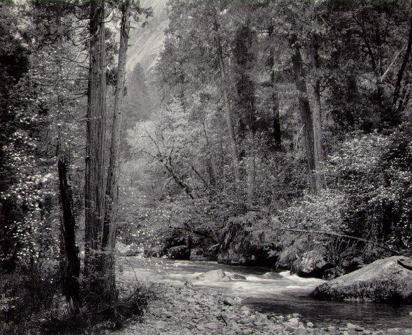 Ansel Adams Photography | Ansel Adams, Tenaya Creek, Dogwood, Rain , Yosemite Valley, 1948: