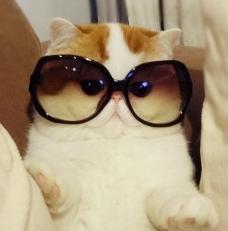 Kitty in glasses