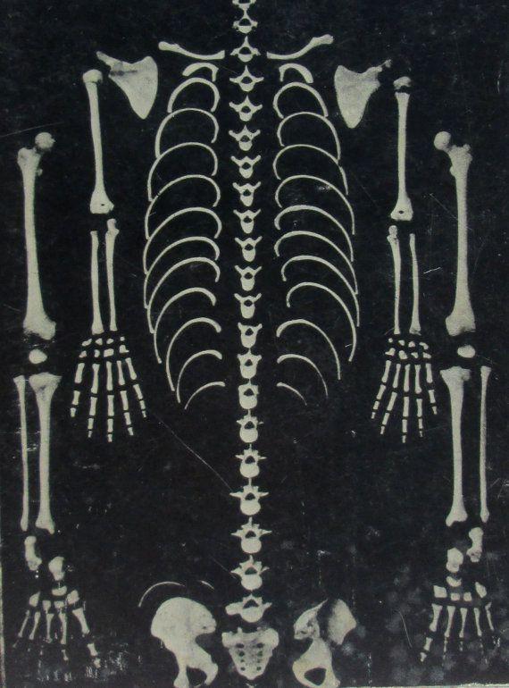 Autopsie D'un Grand Peintre Autopsy of a Grand by nutmegvintage