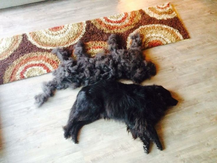 how to get cats to stop shedding