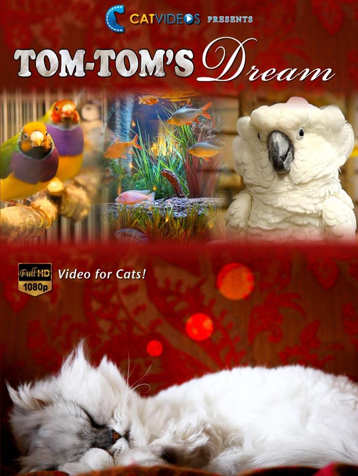 Best Toys For Destructive Cats