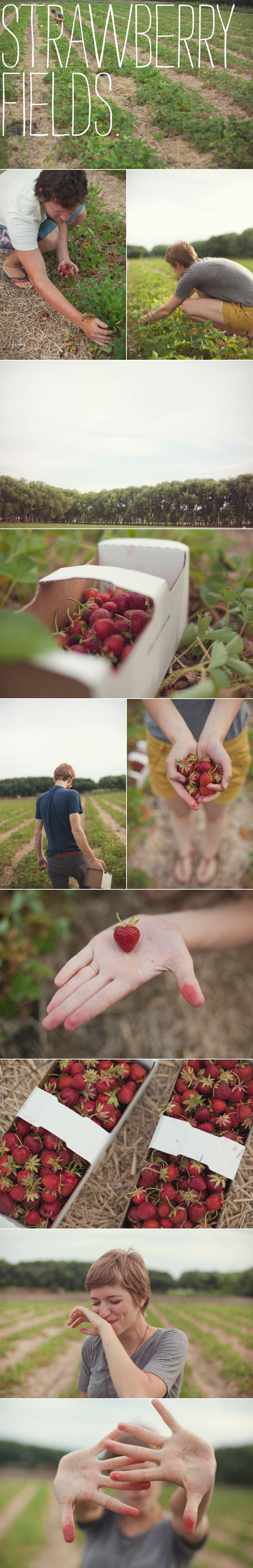 strawberry farm: Back Yard