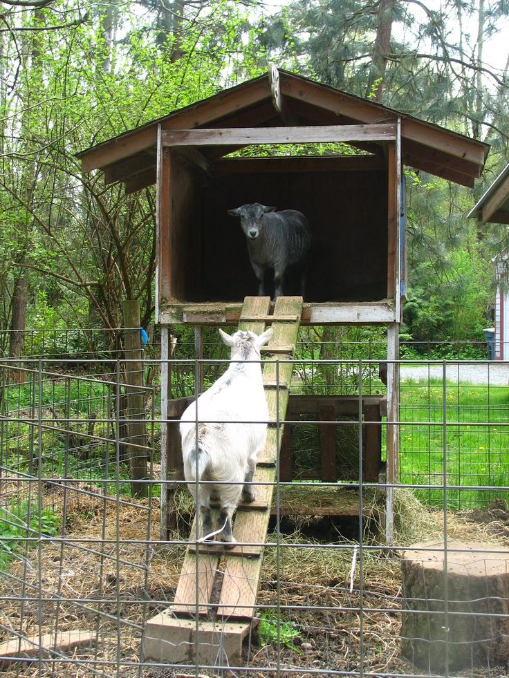 2014 Summer Project Build A Goat House And Pen Get Some