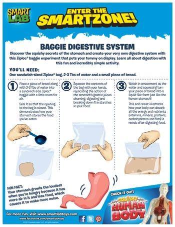Learn Human Body - Digestive System - YouTube