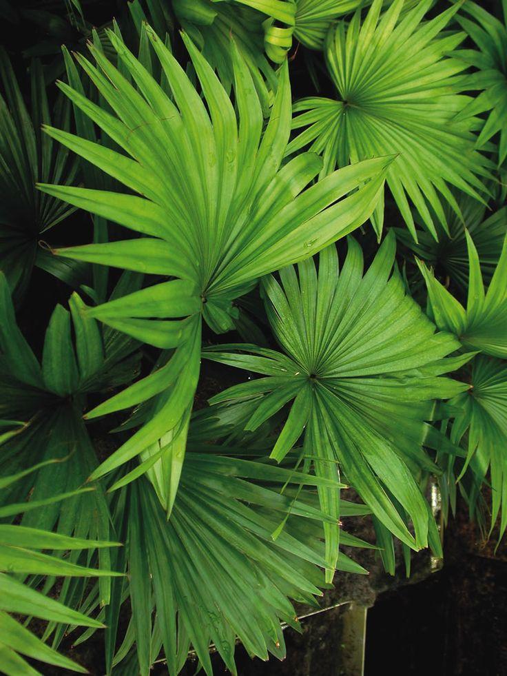 Die besten 25 pflegeleichte zimmerpflanzen ideen auf for Ausgefallene zimmerpflanzen