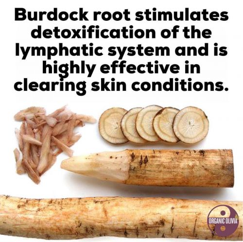 Why Burdock Root is the Best Herb for Lymphatic Cleansing & Clear Skin