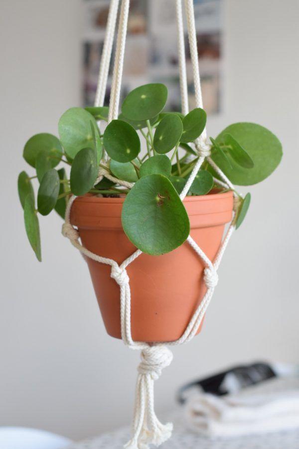 Plantenhangers knopen..!