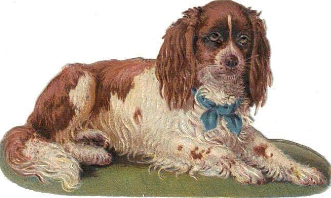 Victorian Die Cut Scrap Cocker Spaniel Dog Blue Collar c1880: