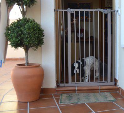 Divisorio per Cani #Cancello #Divisorio #Cane #Cani #Casa #Interni http://www.principini.it/prodotti/cani/divisorio-per-cani