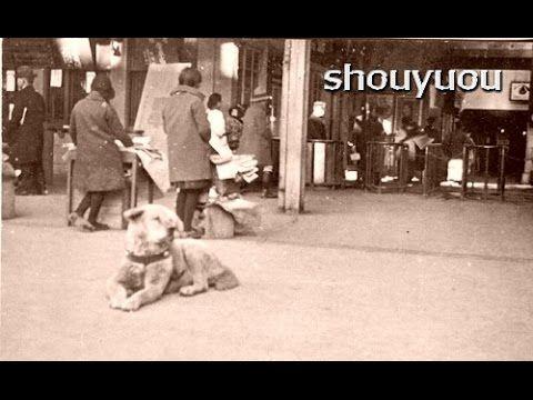 「ハチ公」の貴重な写真がみつかる!! 渋谷駅前で腹ばいになってくつろぐ