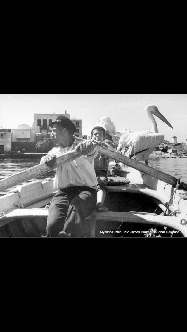 #Mykonos and its #pelican ,in 1951 !