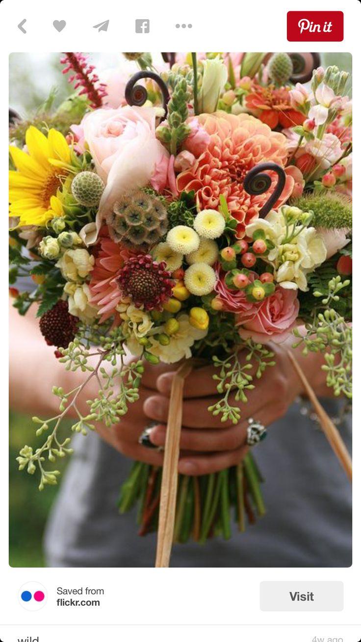 best tangerine dreams for T images on Pinterest Flower