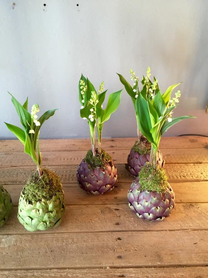 Les 20 meilleures images du tableau le langage des plantes for Artichaut plante grasse