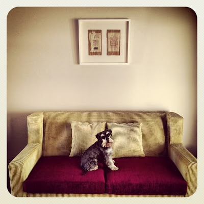 Green and purple couch. Our schnauzer likes it!