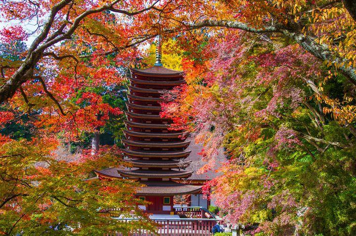まずはこちら。奈良県桜井市の「談山神社(たんざんじんじゃ)」から。世界唯一と言われる木造の十三重塔の周囲にある樹々の美しさは写真などで見たことのある方もいらっしゃるかもしれません。ちなみに談山神社へは近鉄大阪線・桜井駅南口から出ているバスを使うのが便利。
