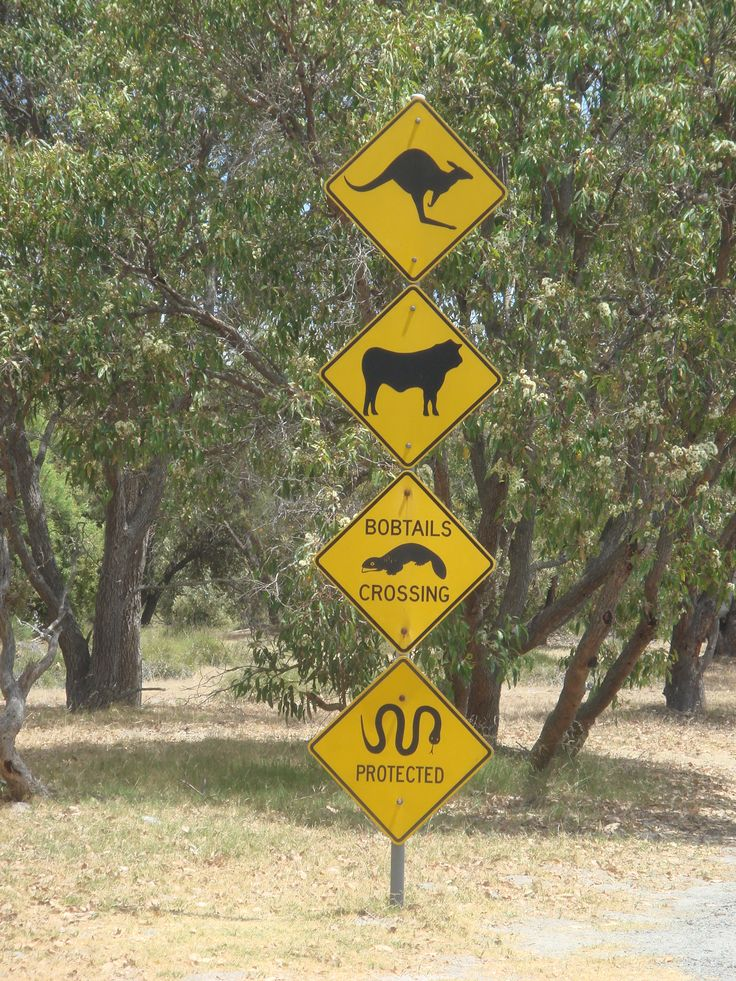 Outback – Drive Safely
