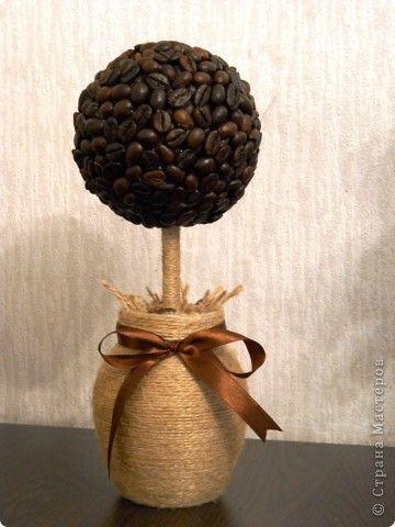 Мое первое кофейное дерево!!!!
