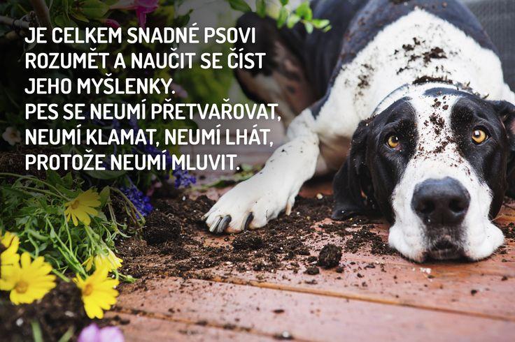 - Nejkrásnější citáty o psech