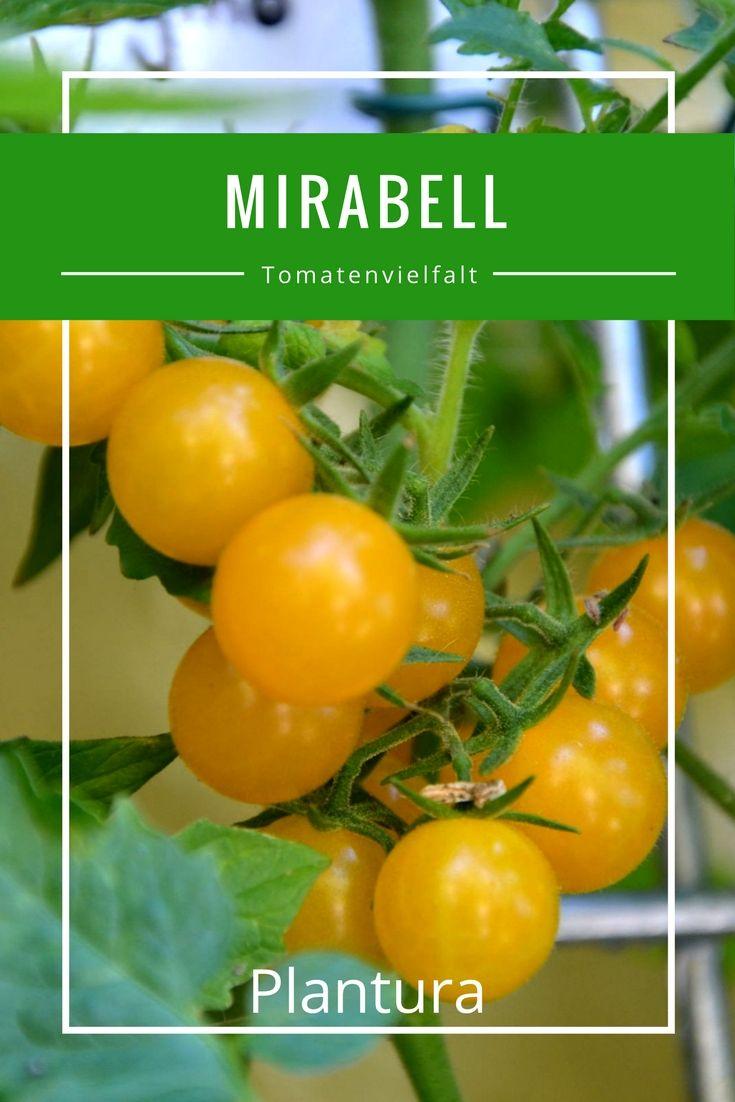Gehen Sie auf eine kulinarische Reise durch die große Vielfalt der Tomatensorten.
