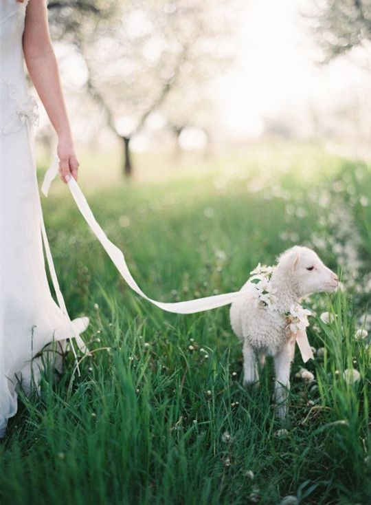 Out walking her lamb.