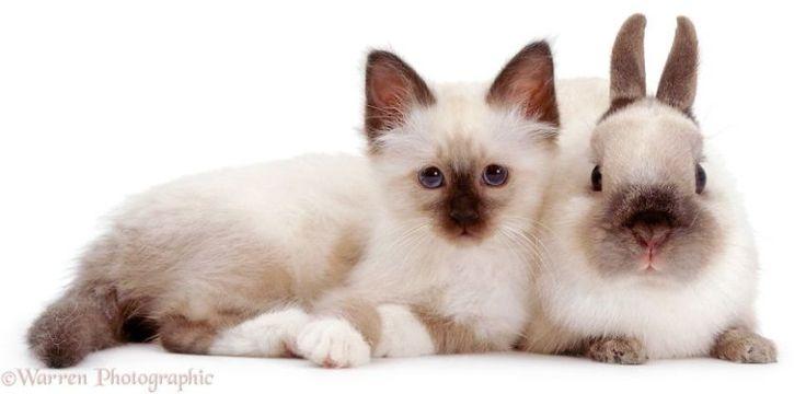 """A agência britânicaWarren Photographic é especializada em animaizinhos de estimação de todas as espécies. Mas, os que mais se destacam são os gatos, cachorros, coelhos e ratos que se parecem demais entre si, sendo quase gêmeos.  """"Minha mãe …"""