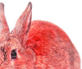 Coniglio ripieno al finocchietto e peperoncini dolci